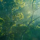 Forest Morning Light by metriognome