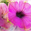 Pink Calibrachoa by Mark Salmon