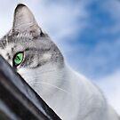 Predator's eye by yurix