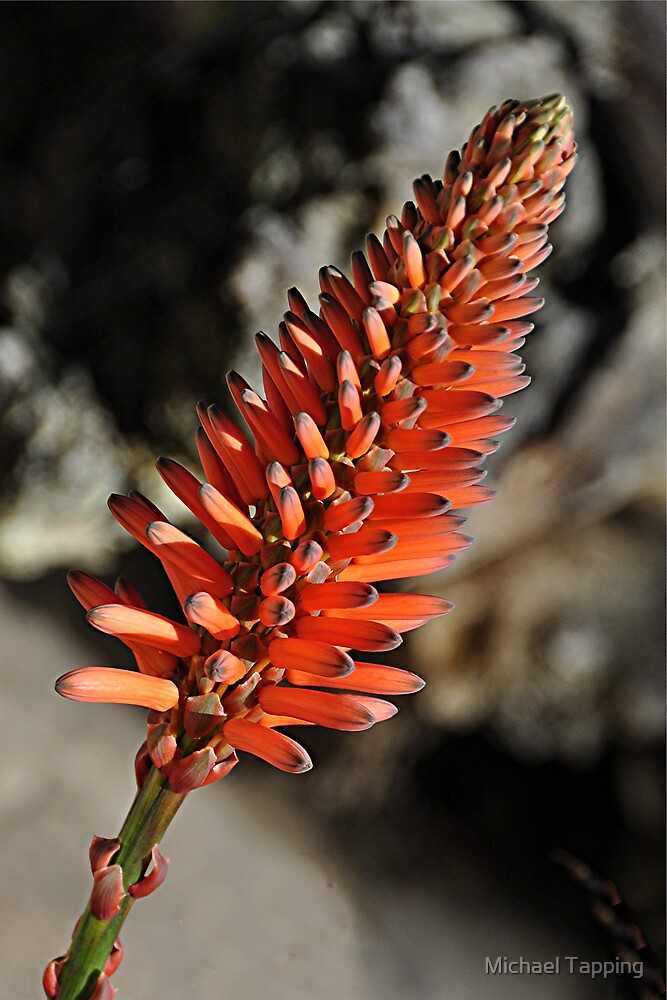 Aloe Vera by Michael Tapping