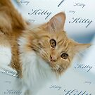 Kitty by narabia