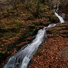 autumn falls by codaimages