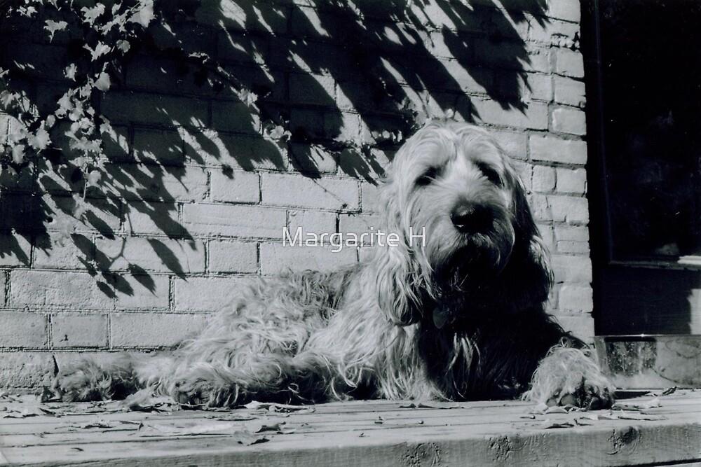 Otterhound by Margarite H