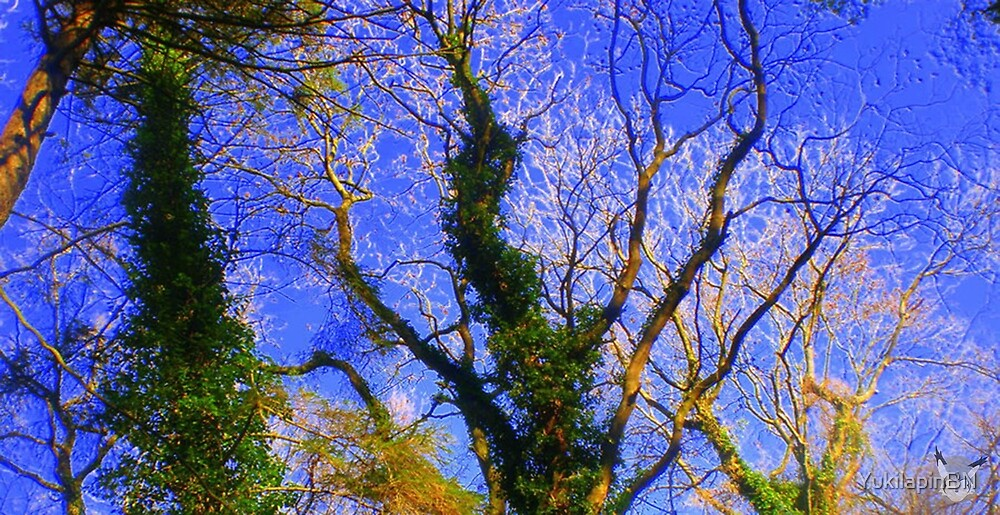 Tree Tops by Bryony 'Goosey' Goessens
