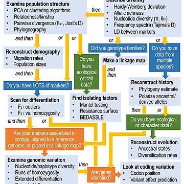 Molecular Ecology, the Flowchart by jbyoder