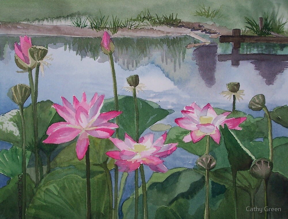 Pink Waterlilies on the Shore by Cathy Green
