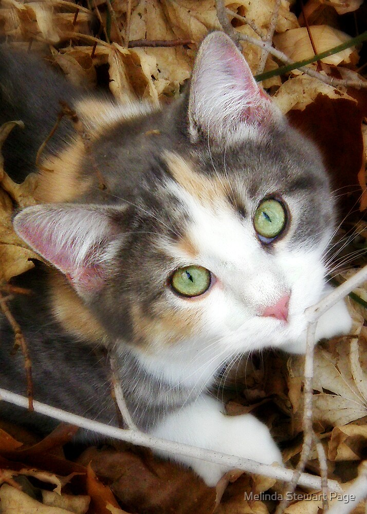 """Sweet Little Kaly"" by Melinda Stewart Page"