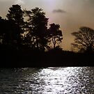 Sunrise Silhouettes by Andy Beattie