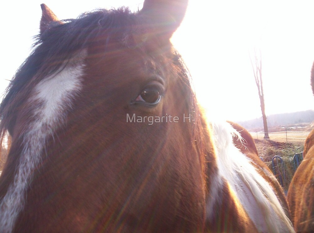 Horse by Margarite H