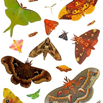 Moths! by FroghavenFarm