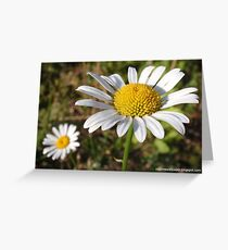 Flowers Of Summer Greeting Card
