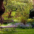 Peaceful Surroundings by Monica M. Scanlan