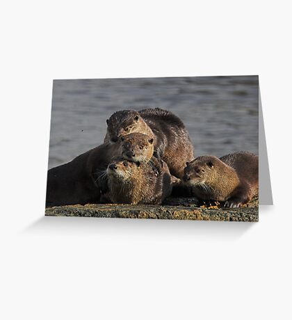 Whole Otter Love Greeting Card