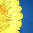 A Splash Of Yellow by Daniel Rayfield