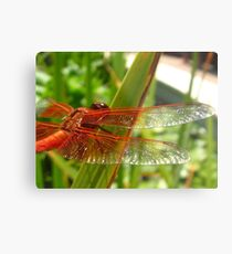 Flame Skimmer wings, Getty Villa Metallbild