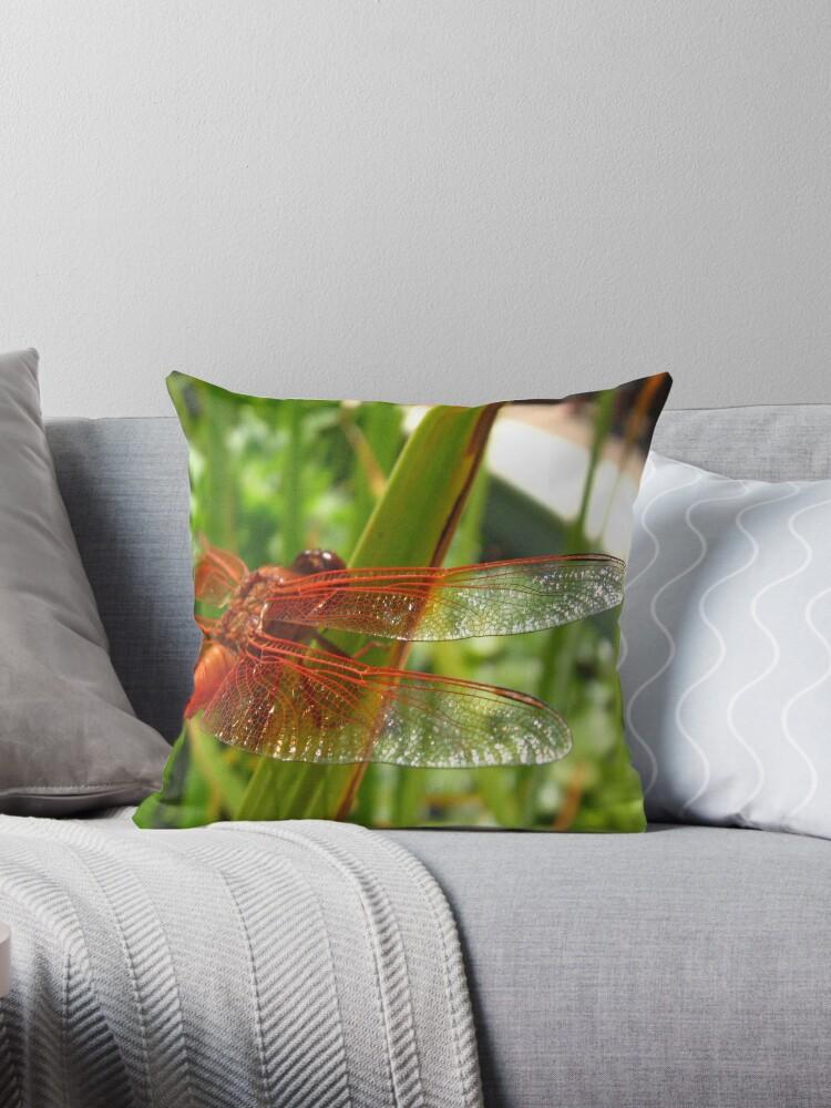 Flame Skimmer wings, Getty Villa by Sherry Lynn Crawford