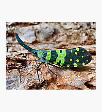 Horned bug, Thailand Photographic Print