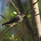 Black Chinned Hummingbird Female by CarrieAnn