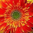 The Beauty Inside by autumnwind