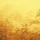 Trees in the mist by bnilesh