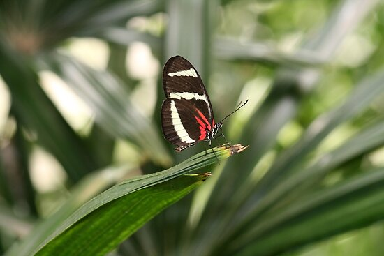 Tiny Butterfly With Striking Color by DARRIN ALDRIDGE