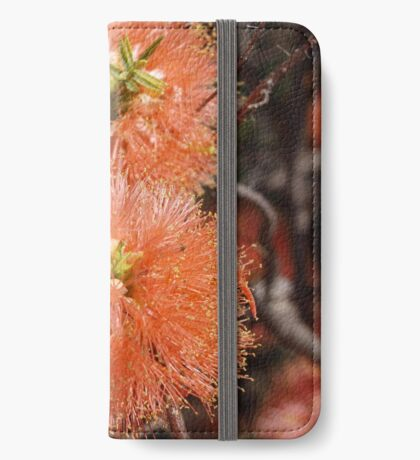 Melaleuca fulgens iPhone Wallet