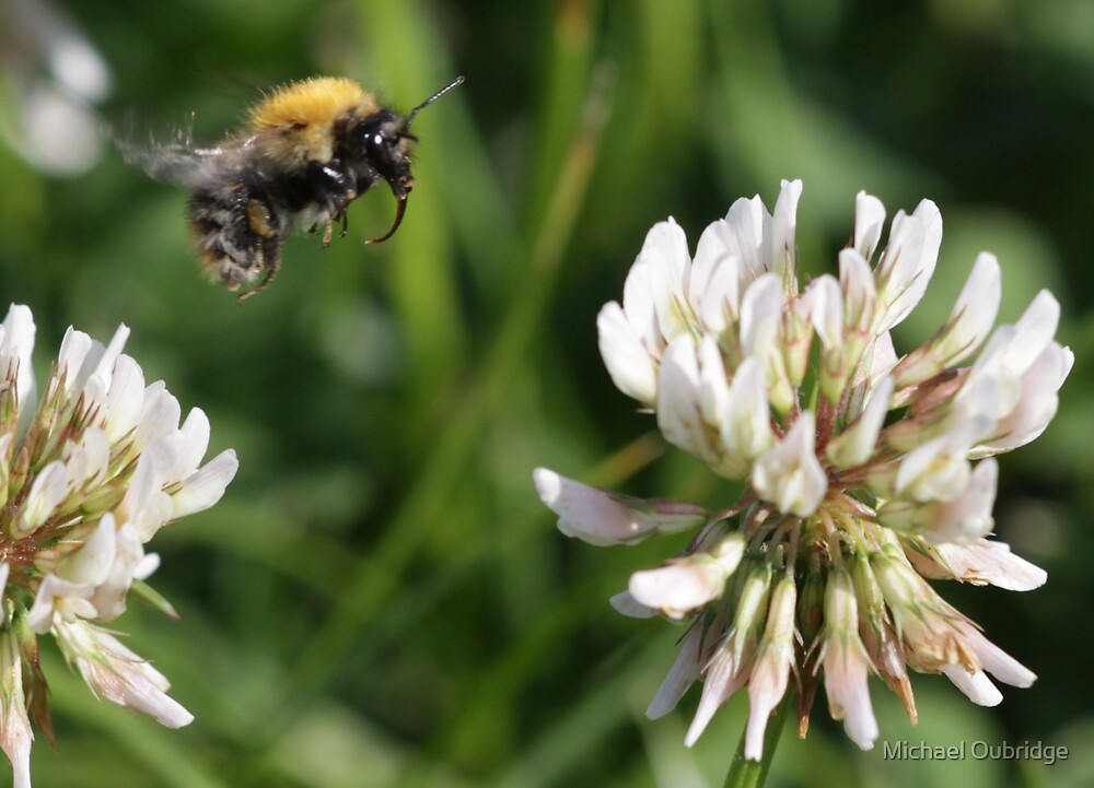 Flight of the bumble bee by Michael Oubridge