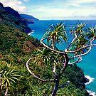 Na Pali Coast Trail  by kevin smith  skystudiohawaii
