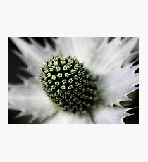 Heart of the White Explosion Photographic Print
