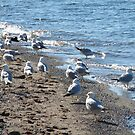 Gulls On The Beach by AuntieJ