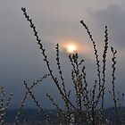 Willow buds in twilight zonw by Adrian Bud