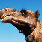Camel of the Desert 2 by Lexa Harpell
