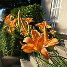 Day Lilies by bgoddard