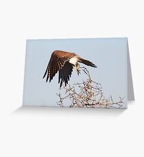 lift off Greeting Card