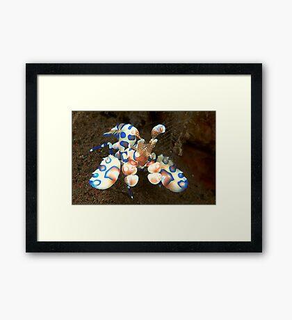 Harlequin Highlights Framed Print
