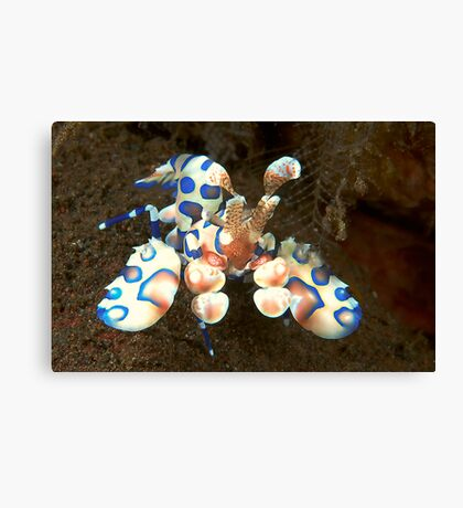 Harlequin Highlights Canvas Print