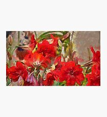 Red Lilies Photographic Print