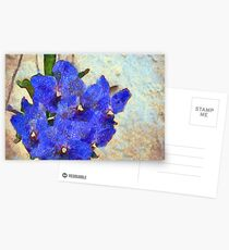 Vandas in Bloom Postcards