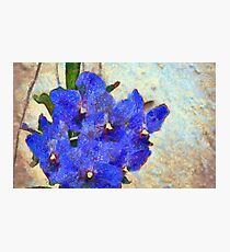 Vandas in Bloom Photographic Print