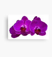 Fuchsia Phalaenopsis Canvas Print