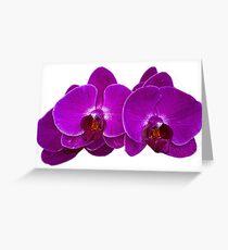 Fuchsia Phalaenopsis Greeting Card