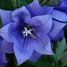 Beautiyful Blue by candy