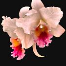 Orchids #4 by photorolandi