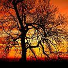 Orange Ash Tree Sunset Silhouette  by heidiannemorris