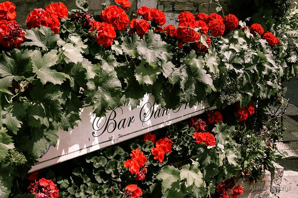 Bright Red Flowers Surrounding Sign by Alana Yurczyk