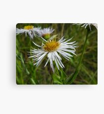 An insect Canvas Print