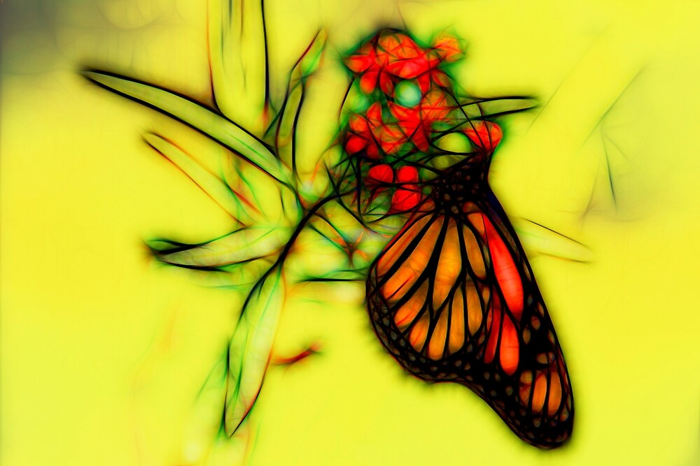 Monarch Butterfly Graphic Sketch by Kay Brewer