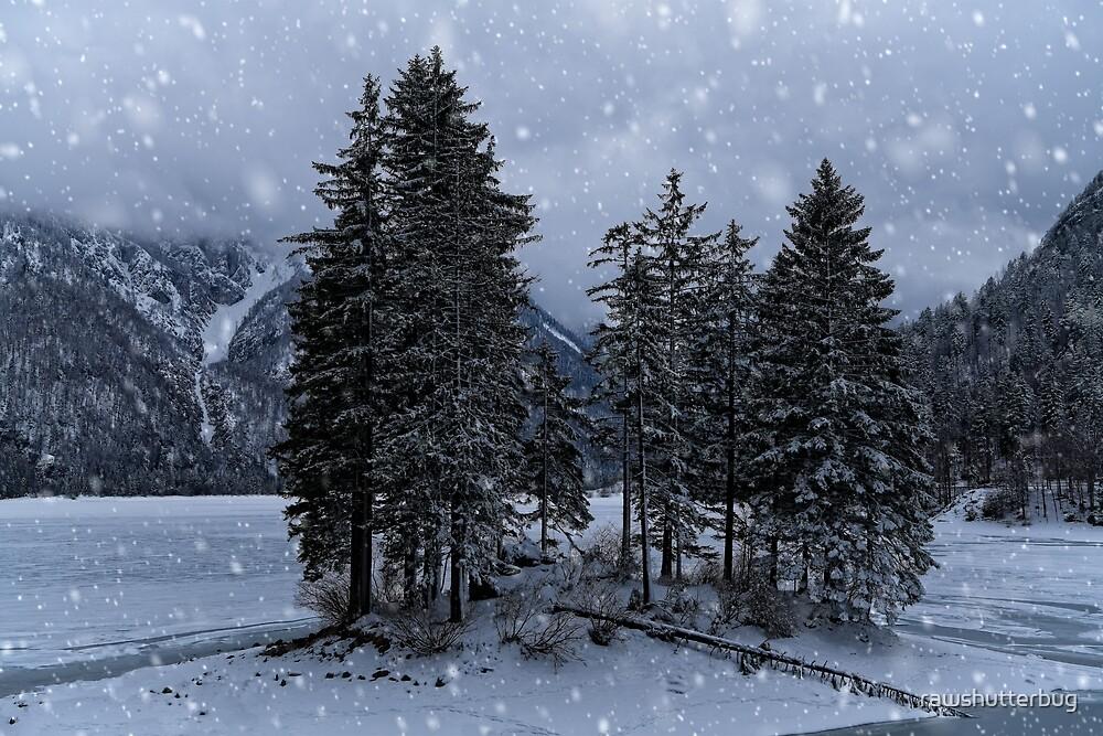Trees At The Frozen Lago del Predil by rawshutterbug