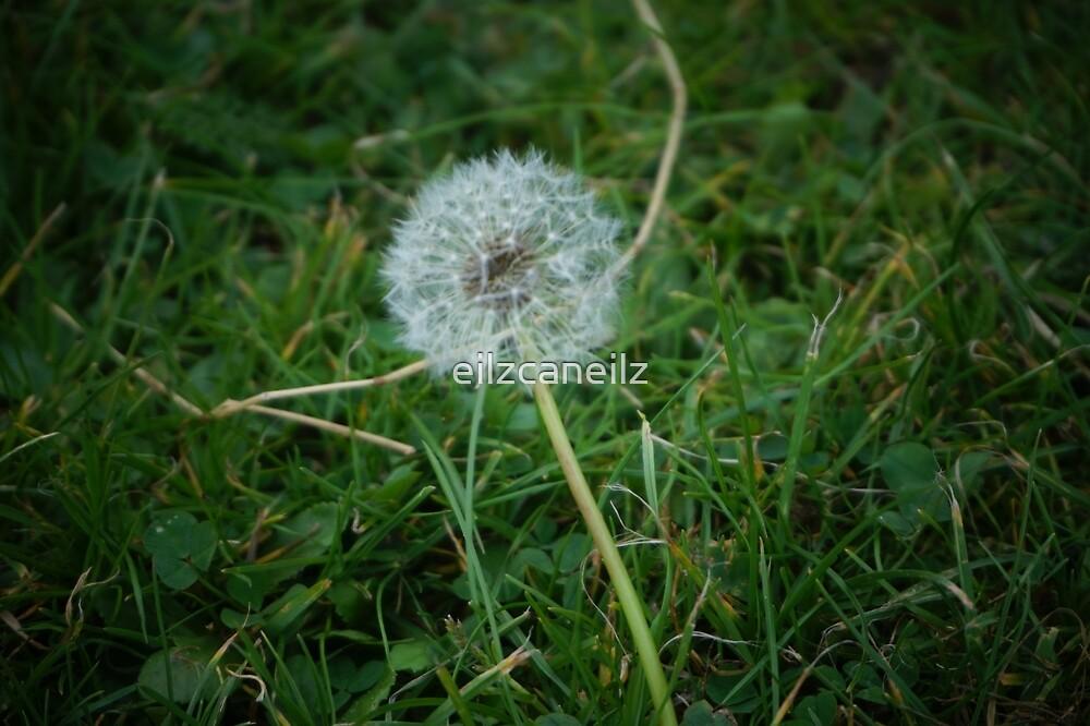 Wish by eilzcaneilz