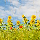 Sunflowers by RebeccaWeston